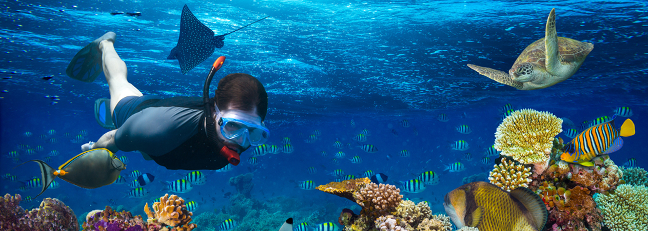 Snorkeling Excursions - Hurghada Snorkelling Excursion - Tours From Hurghada