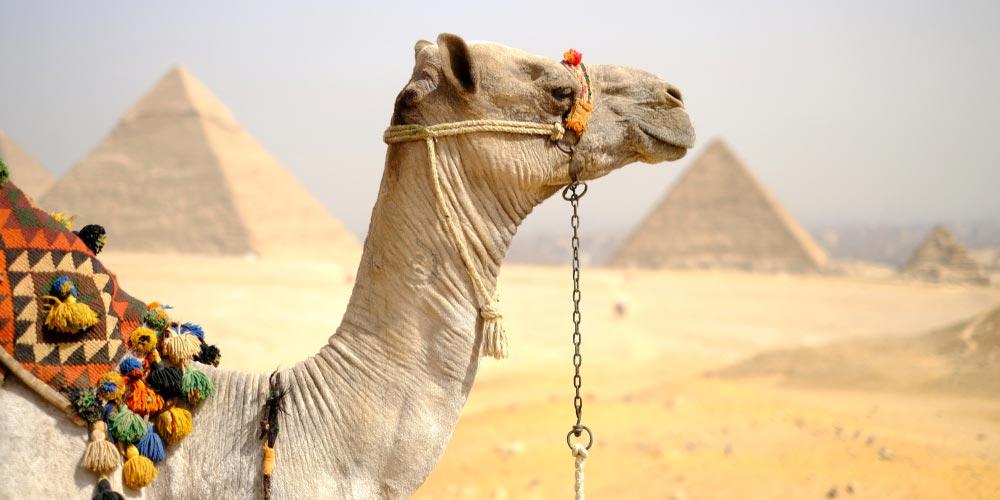 Die Pyramiden von Gizeh - 2 Tägiger Ausflug nach Kairo und Luxor von Makadi - Tours from Hurghada