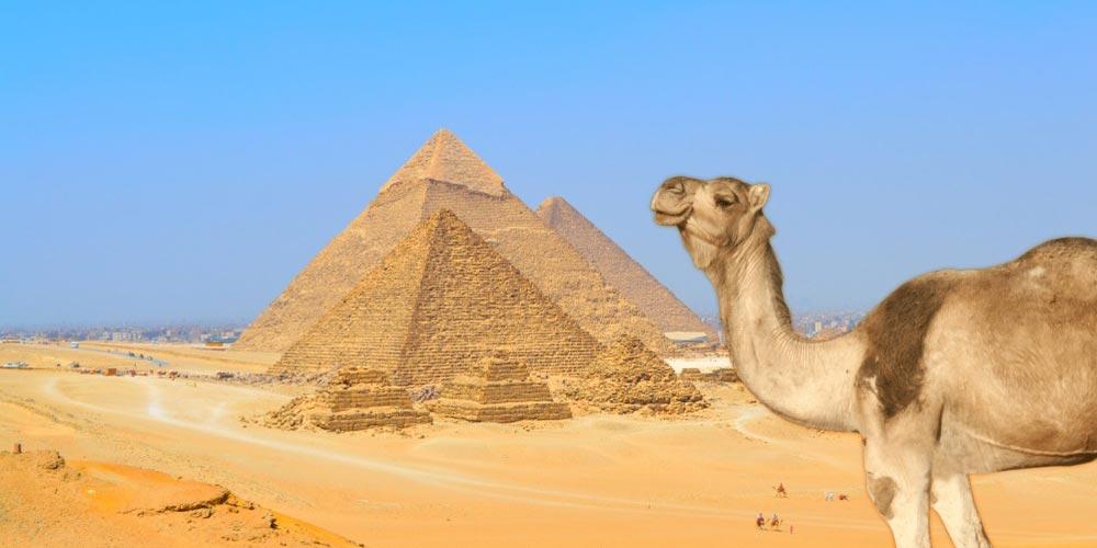 Die Pyramiden von Gizeh - Ausflug nach Kairo vonEl Gouna mit Einem Fahrzeug - Tours from Hurghada
