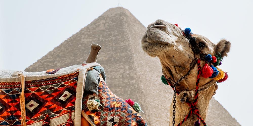 Gizeh Pyramiden - Ausflug nach Kairo vonEl Gouna mit Einem Fahrzeug - Tours from Hurghada