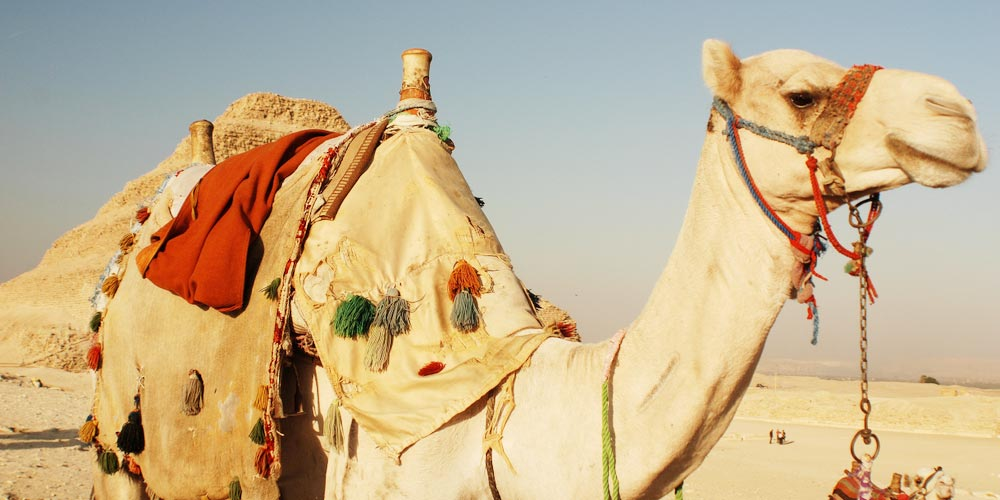 Gizeh Pyramiden - Ausflug nach Kairo vonEl Gouna mitFlug - Tours from Hurghada