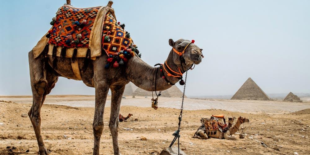 Pyramiden - Ausflug von Hurghada nach Kairo mit Einem Fahrzeug - Tours from Hurghada