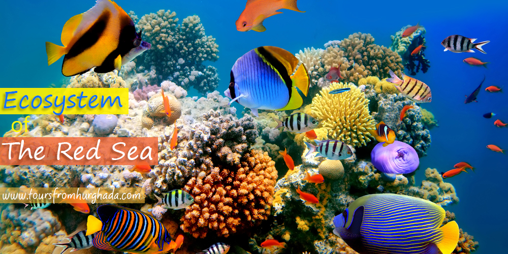The-Red-Sea-Ecosystem-Tours-from-Hurghada