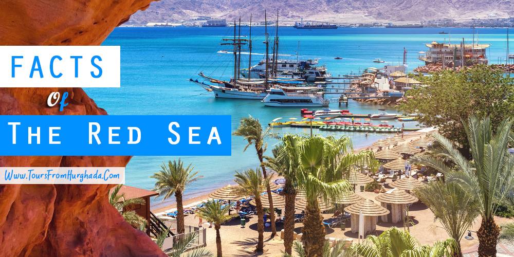 The Red Sea Facts - Tours from Hurghada