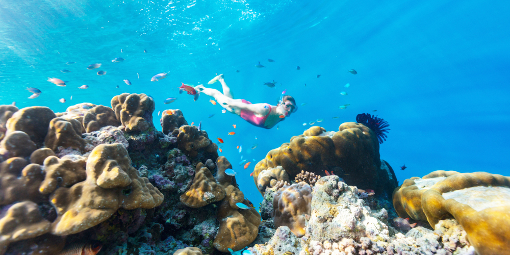 Abu Dabbab Snorkeling From Hurghada Tours From Hurghada