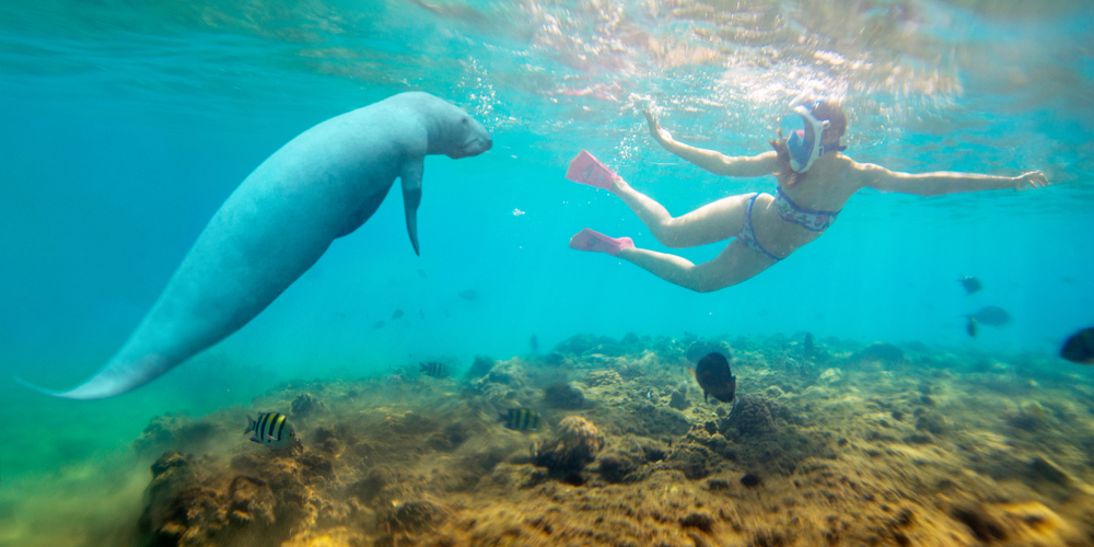 Abu Dabbab Snorkeling From Hurghada