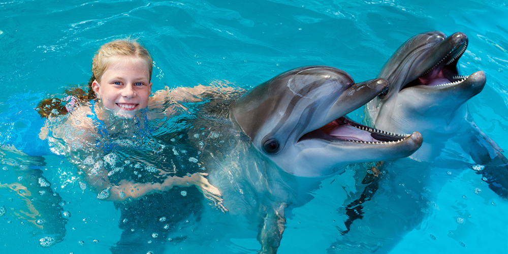 Dolphin House Hurghada Day Tour Tours From Hurghada