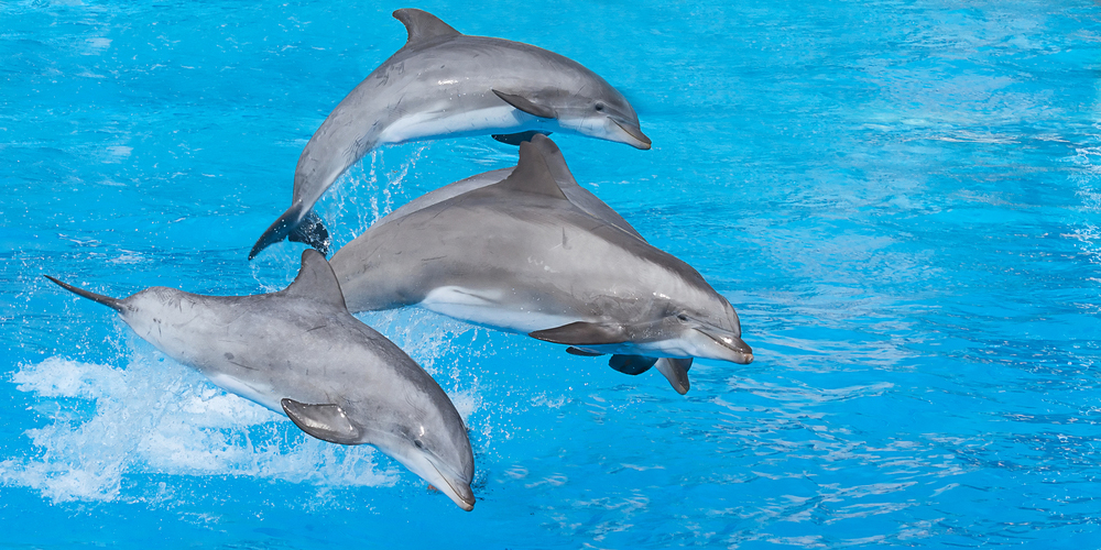 Dolphin House Hurghada Day Tour - Tours From Hurghada