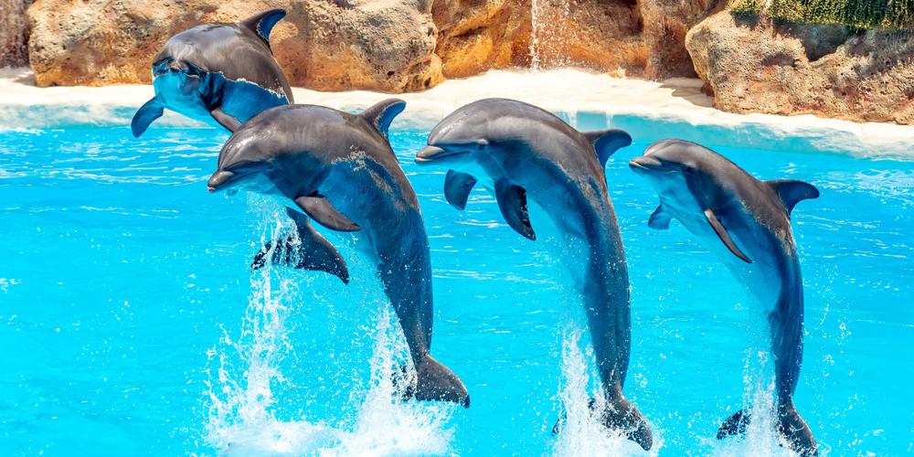 Dolphin House Hurghada Day Tour ToursFromHurghada