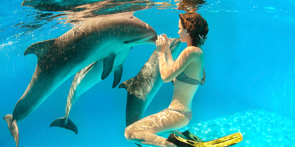 Satayh Dolphin Reef Snorkeling Trip from Marsa Alam Tours From Hurghada