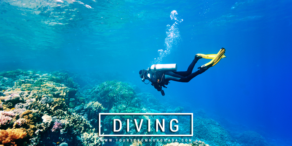 Diving Excursions - Things to Do in Marsa Alam - Tours from Hurghada