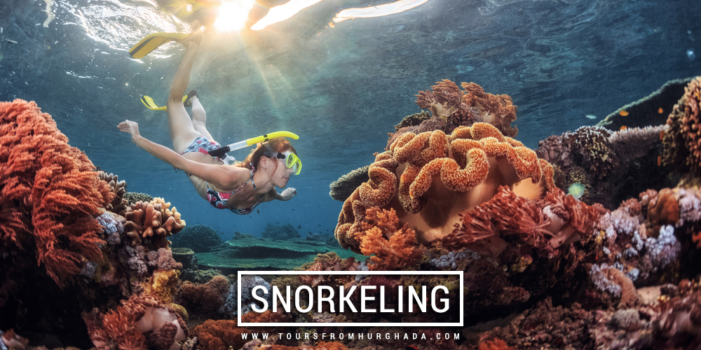 Snorkeling Excursions - Things to Do in Marsa Alam - Tours from Hurghada