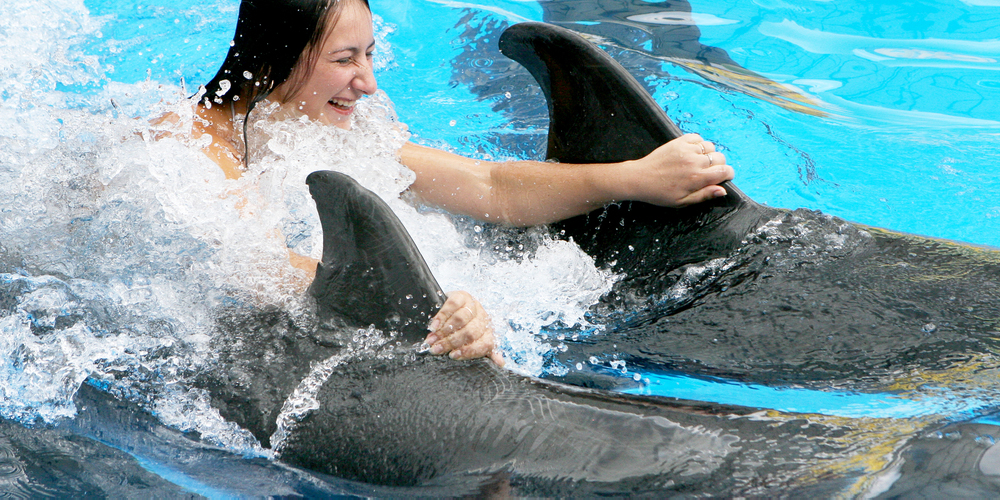 Swimming with Dolphins in Hurghada - Tours From Hurghada