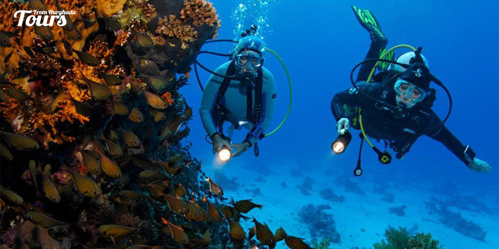 Abu Hashesh - Hurghada Diving Sites - Tours From Hurghada