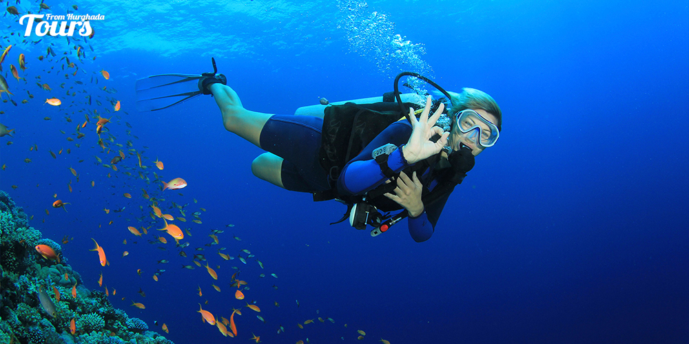 """El-Fanus """"The Dolphin Reef"""" - Hurghada Diving Sites - Tours From Hurghada"""