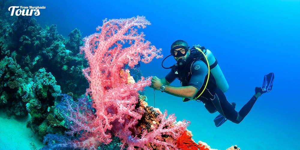 Giftun Islands - Hurghada Diving Sites - Tours From Hurghada