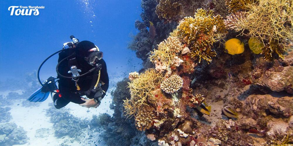 Gota Abu Ramada - Hurghada Diving Sites - Tours From Hurghada