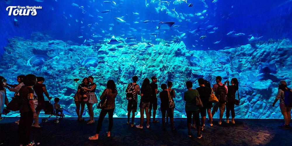 Hurghada Grand Aquarium - Things to Do in Hurghada - Tours From Hurghada