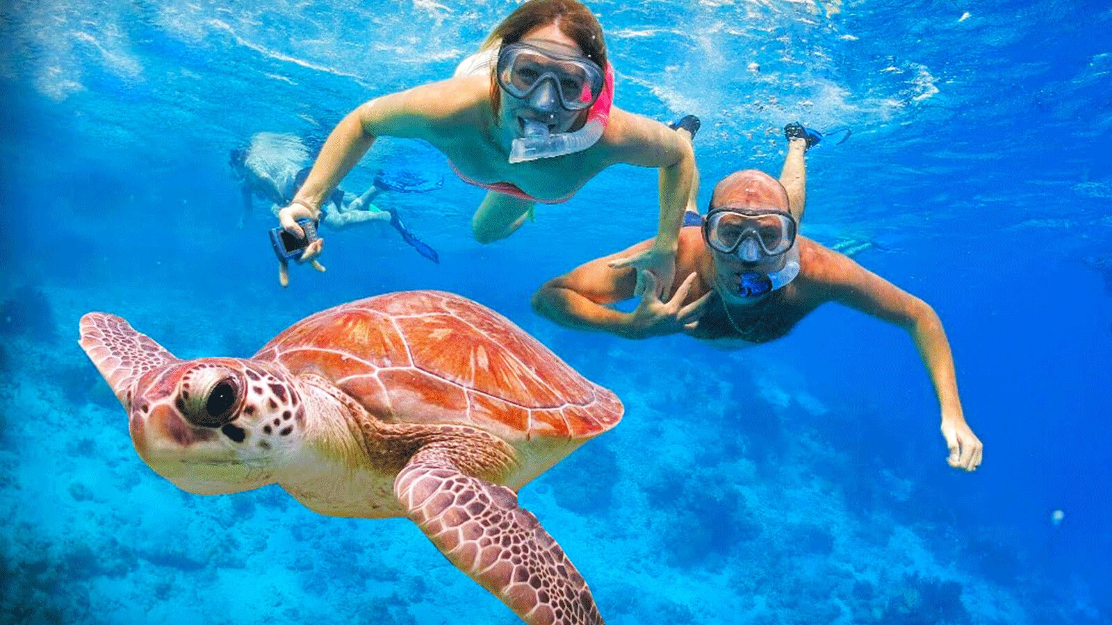 Paradise Snorkeling Trip Full Day from El-Gouna