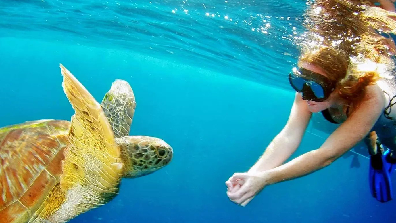 Paradise Tour Snorkeling Trip Full Day from El-Gouna