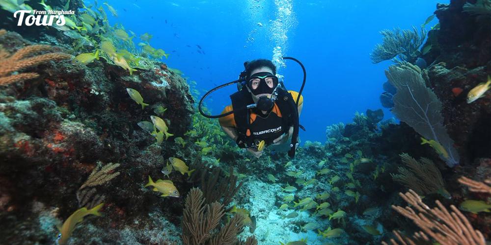 Royal Makadi Housereef - Hurghada Diving Sites - Tours From Hurghada