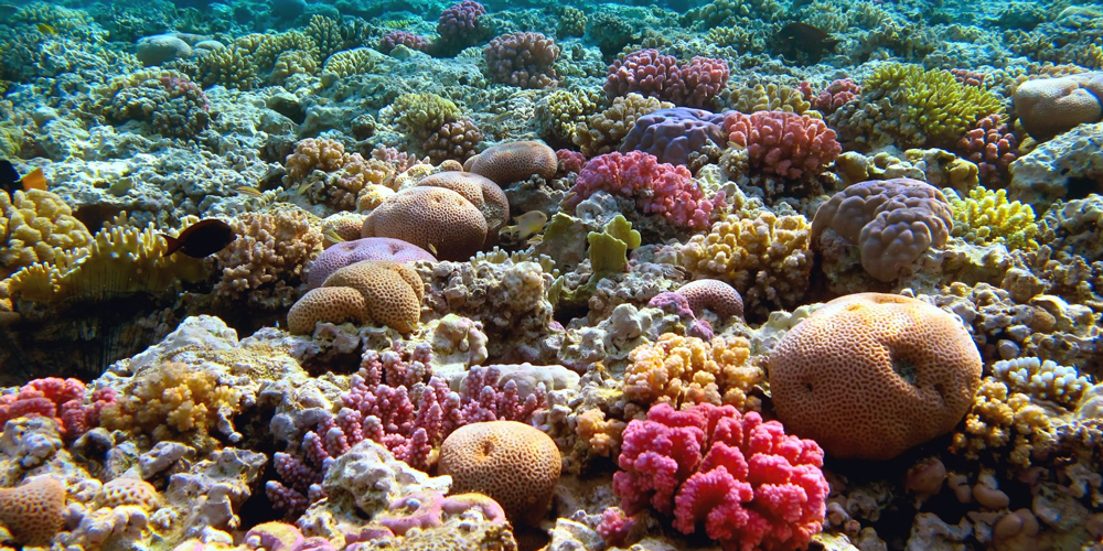 Sharm El Naga Snorkeling From El Gouna - Tours from Hurghada
