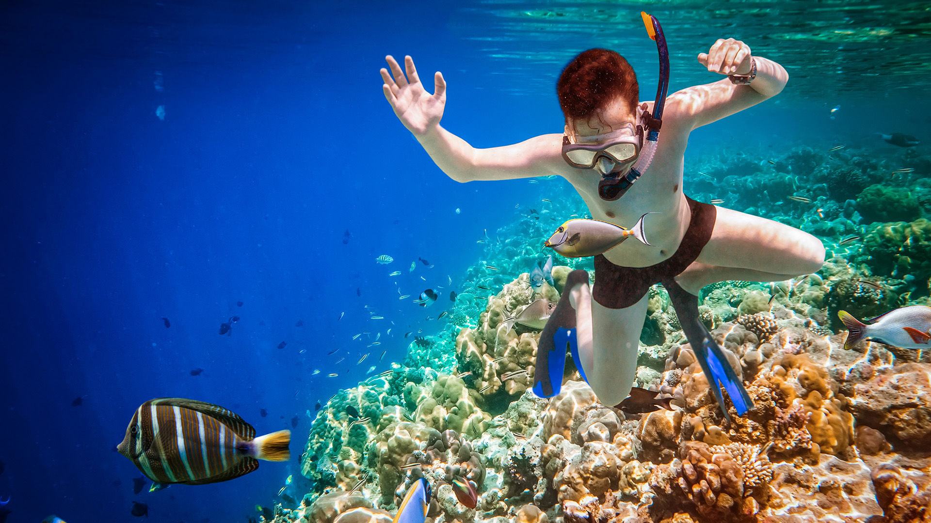 Snorkeling Trip Full Day from El-Gouna in Paradise Island