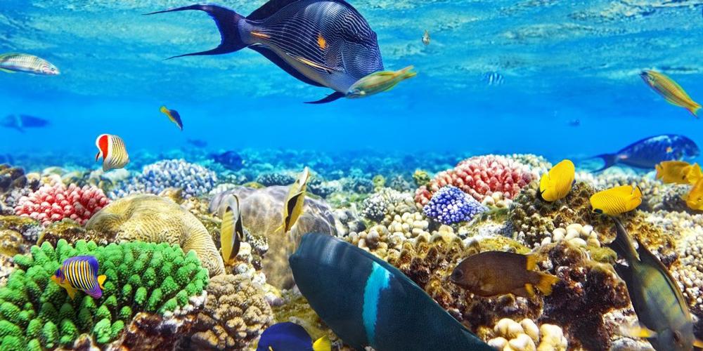 Snorkeling at Sharm El Naga From El Gouna - Tours from Hurghada (2)