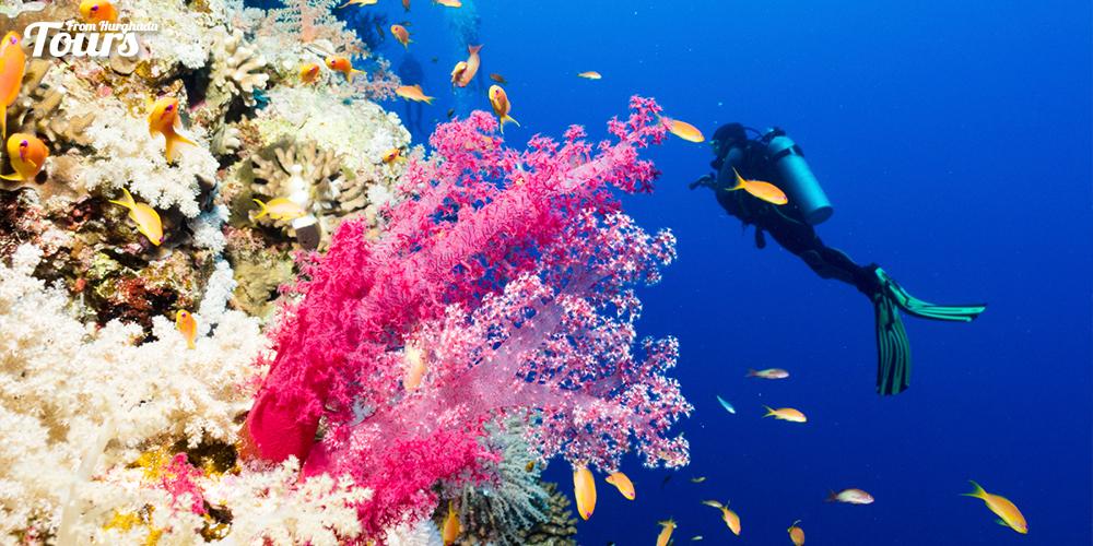 Soma Bay - Hurghada Beaches - Tours From Hurghada