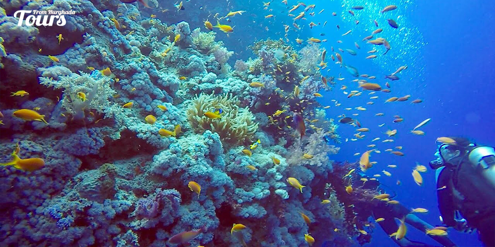 Soma Bay - Hurghada Diving Sites - Tours From Hurghada
