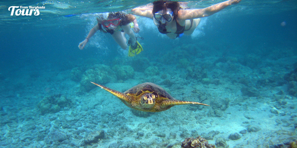 Turtle Bay - Hurghada Diving Sites - Tours From Hurghada