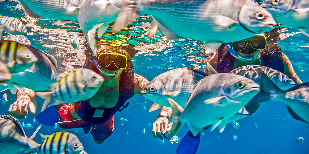 Abu Dabbab Dugong Bay Snorkeling In Marsa Alam - Tours From Hurghada