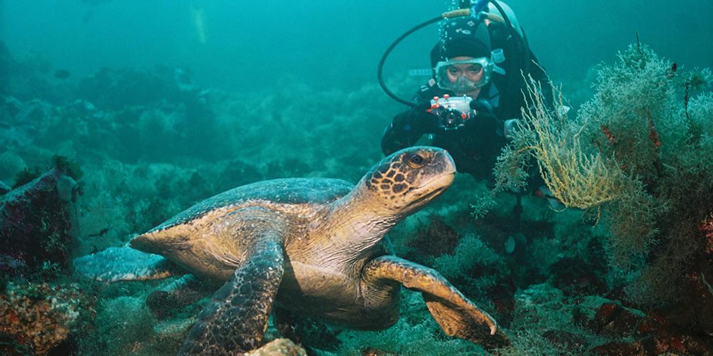 Abu Dabbab Dugong Bay Snorkeling Tours In Marsa Alam - Tours From Hurghada