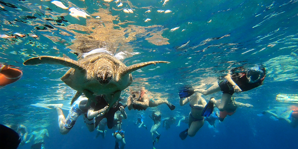 Marsa Alam to Abu Dabbab Dugong Bay Tour - Tours From Hurghada