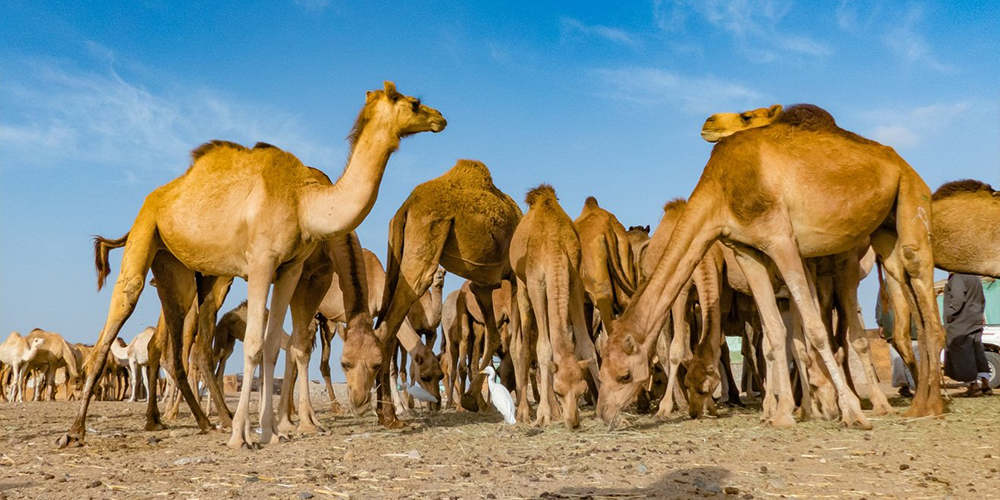 Shalateen Tour From Marsa Alam - Marsa Alam Excurions