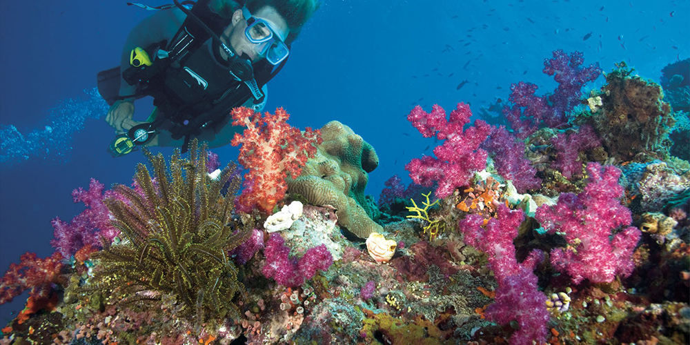 Sharm El LuliSnorkeling Trip From Marsa Alam - Tours From Hurghada