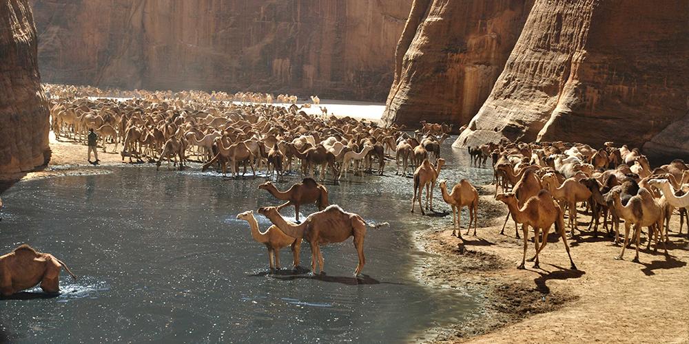 Wadi El Gemal From Marsa Alam Day Tour - Tours From Hurghada
