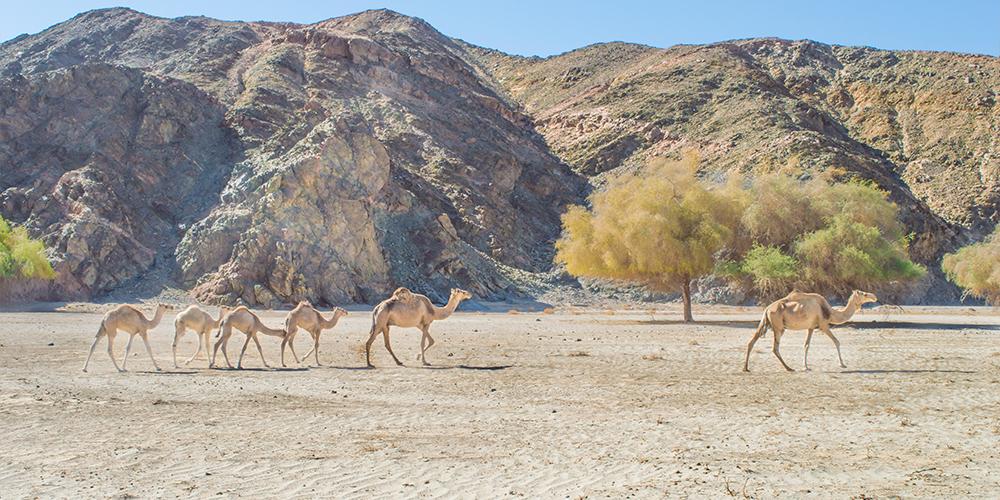 Wadi El Gemal Marsa Alam Day Tour - Tours From Hurghada
