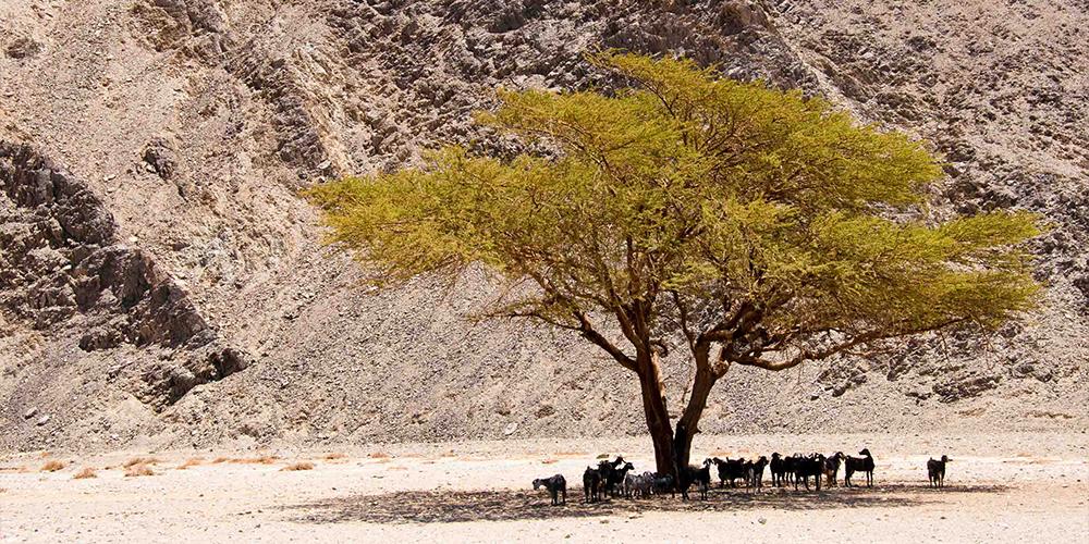Wadi El Gemal Marsa Alam Day Trip - Tours From Hurghada