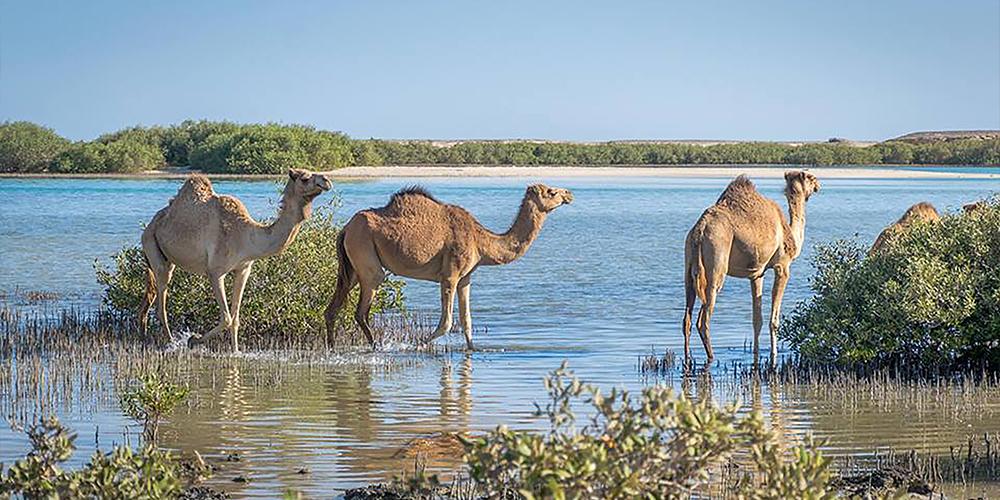 Wadi El Gemal Marsa Alam Tour - Tours From Hurghada