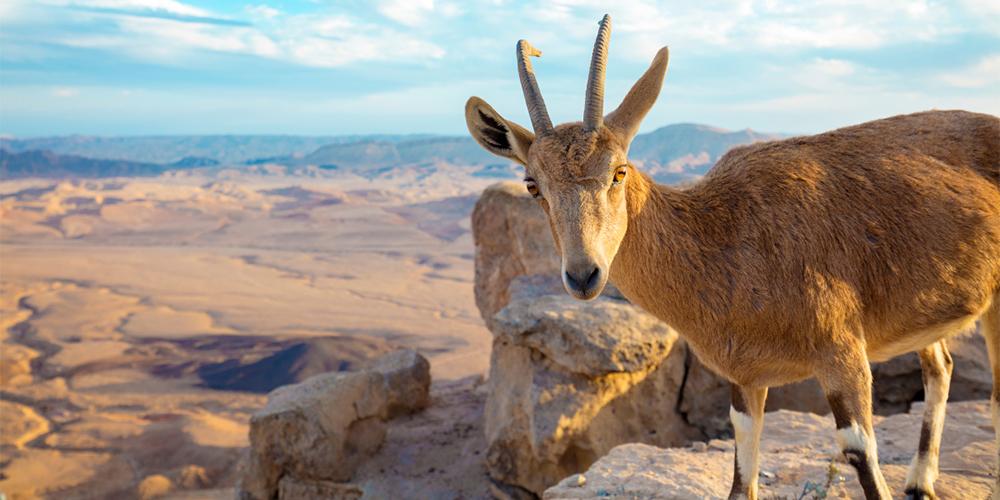 Wadi El Gemal Tour From Marsa Alam - Tours From Hurghada