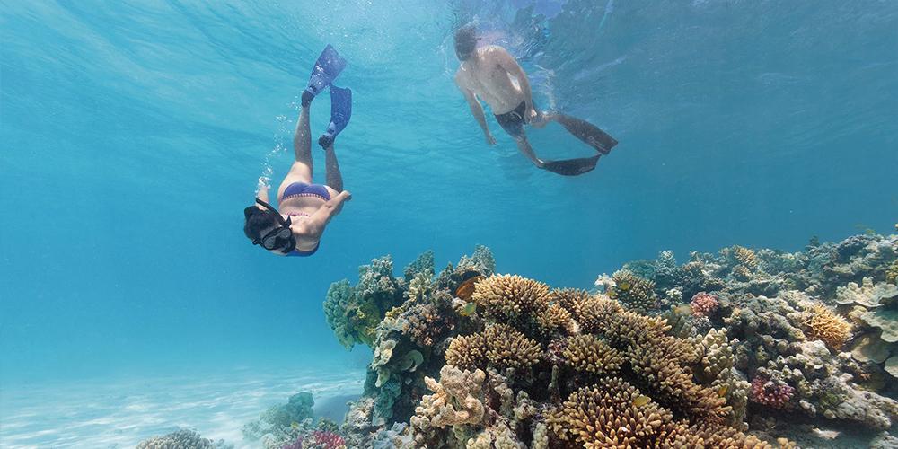 Abu Dabbab Dugong Bay Day Tour - Tours From Hurghada