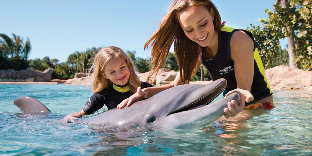 Swimming with Dolphins in El Gouna - Dolphins Trip in El Gouna - Tours From Hurghada