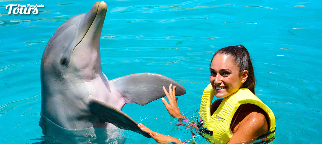 Swimming with Dolphins in El Gouna - El Gouna Day Tours - Tours From Hurghada