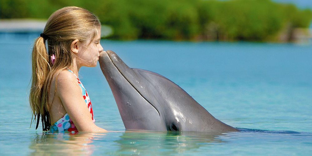 Swimming with Dolphins in El Gouna - El Gouna Dolphin Tours - Tours From Hurghada