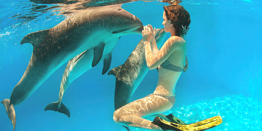 Swimming with Dolphins in El Gouna - El Gouna Dolphins - Tours From Hurghada