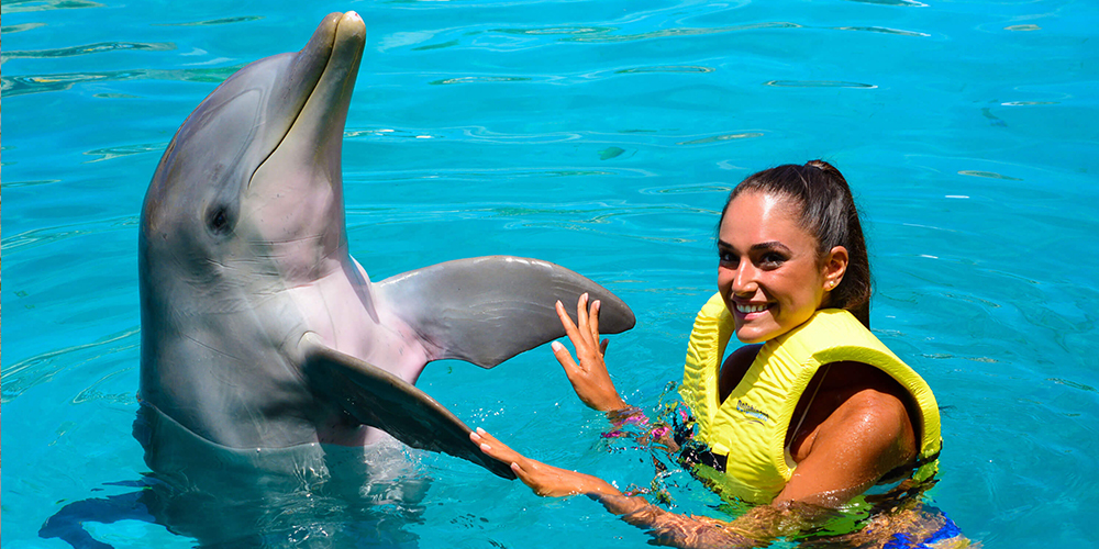 Swimming with Dolphins in El Gouna - El Gouna Tours - Tours From Hurghada