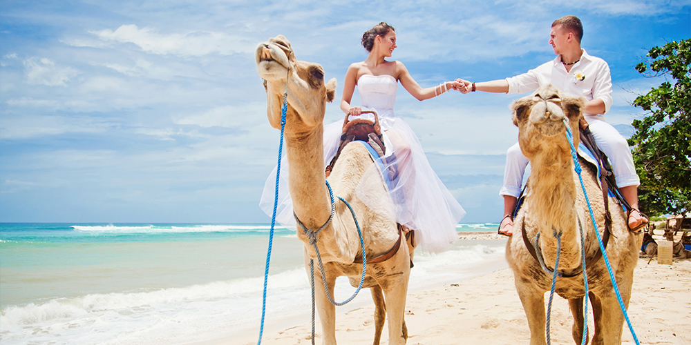 Camel Riding Port Ghalib Day Trip - Port Ghalib Excursions - Tours From Hurghada