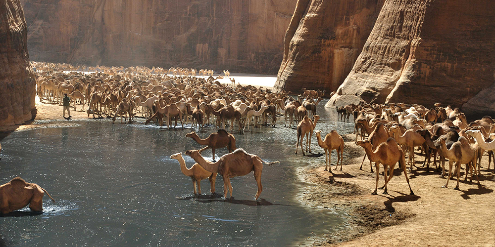 Port Ghalib tour to Wadi El Gemal - Port Ghalib Excursions - Tours From Hurghada