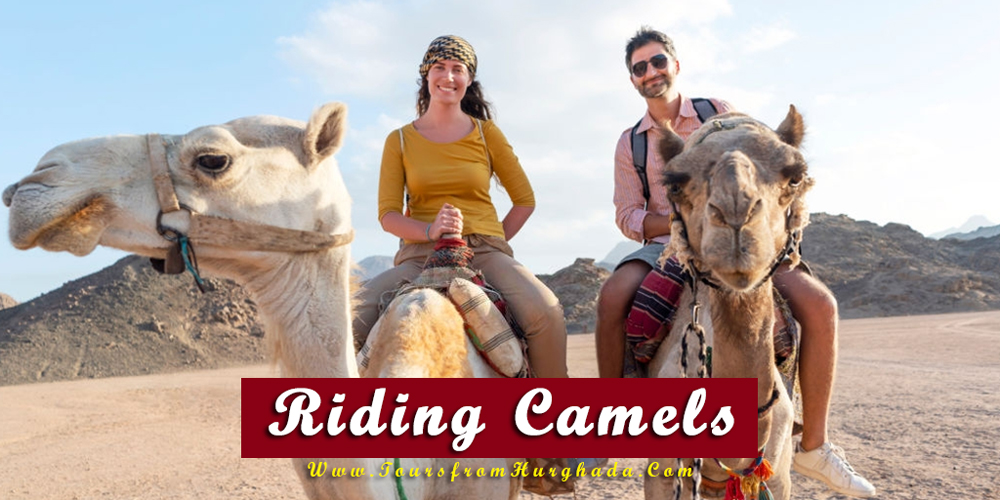 Riding Camels - Things to Do in Makadi Bay - Tours from Hurghada